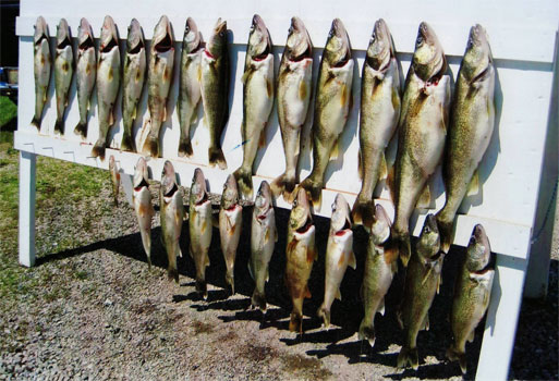 Walleye Fishing Guide